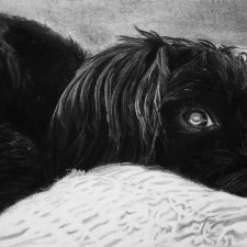 Dolly The Morkie | Original Art portrait | Mishkalo Wedding Registry