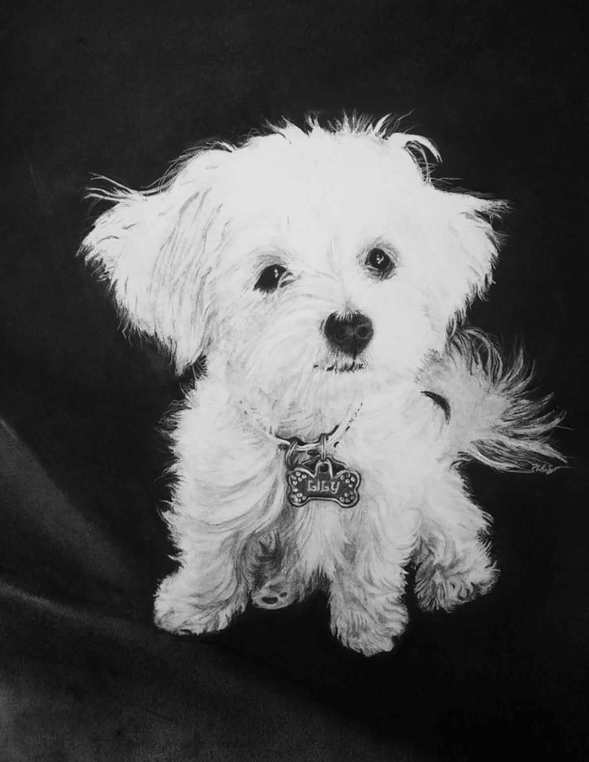 Lily The Maltese | Best portrait | Mishkalo Bridal Registry